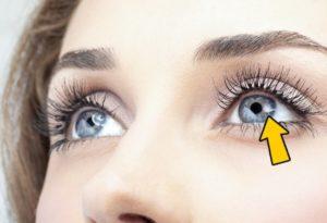 eyes-main-organ